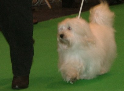 Vivaldi at crufts 2008